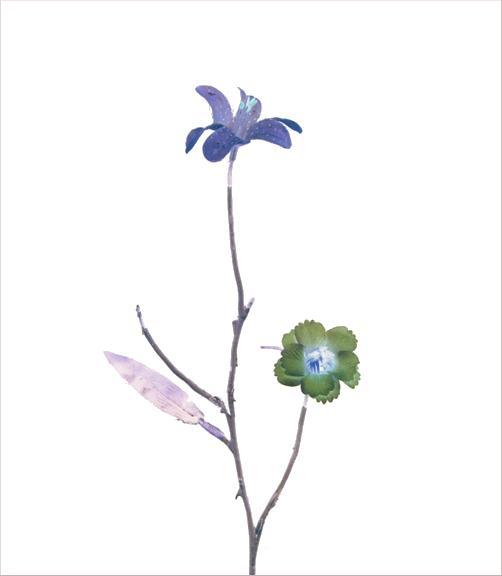 madicobosch_blossom04