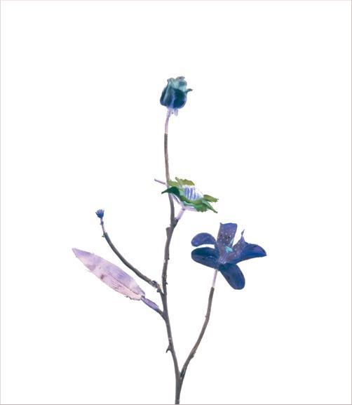 madicobosch_blossom07
