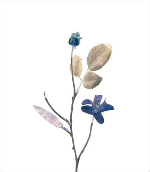 madicobosch_blossom09