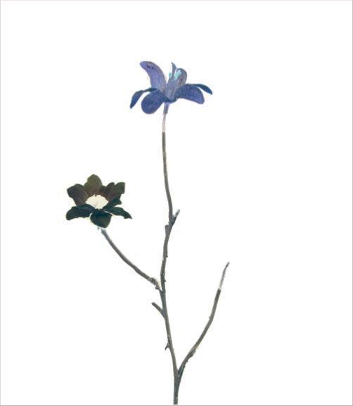madicobosch_blossom10