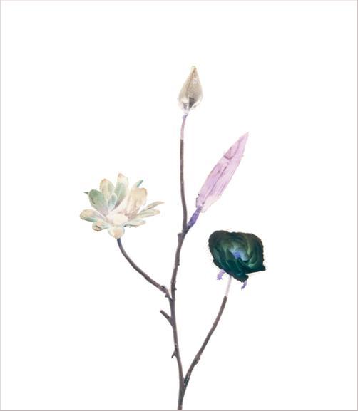madicobosch_blossom14