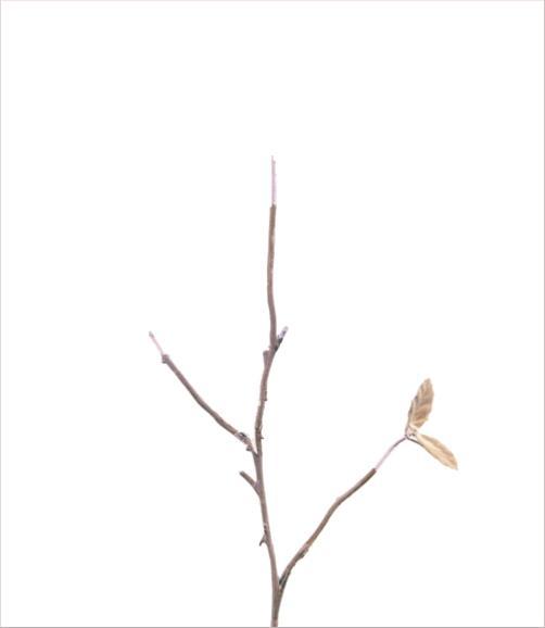 madicobosch_blossom15