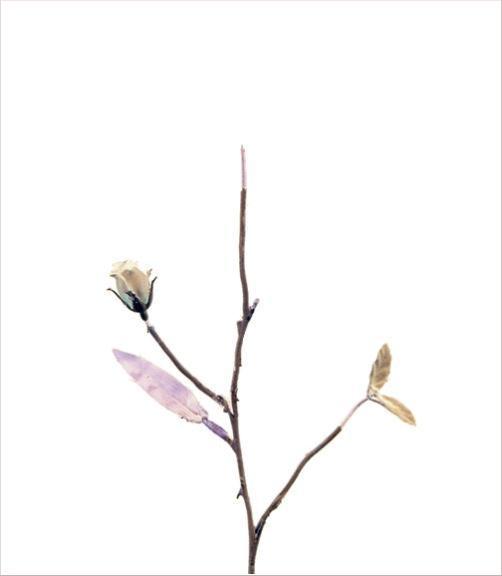 madicobosch_blossom18
