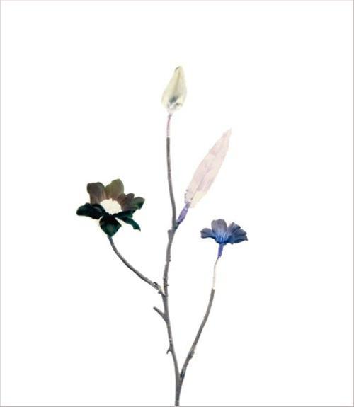 madicobosch_blossom19