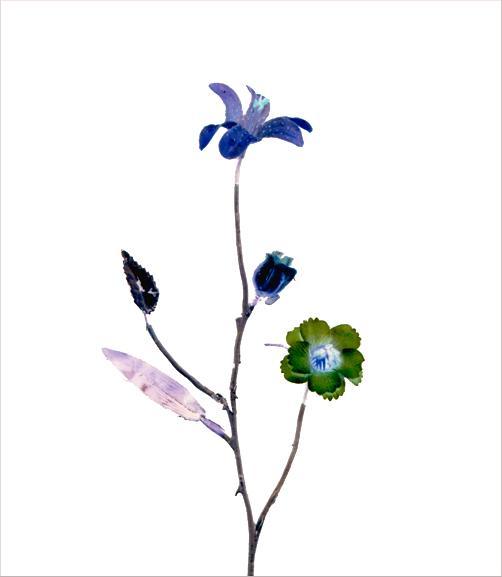 madicobosch_blossom20